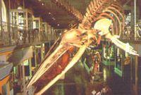 Musée d'Histoire Naturelle, de Géologie et d'Ethnographie