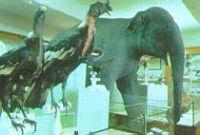 Musée d'Histoire Naturelle Victor-Brun