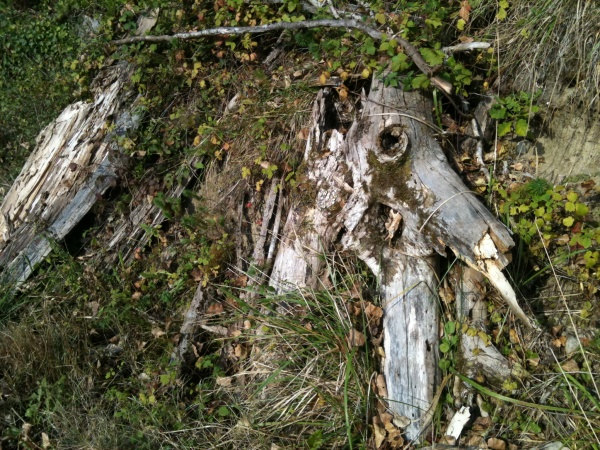 Photo Ceyzérieu - Elephantus Apricius (talus gauche direction Avrissieu d'en bas -> Samissieu