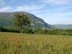 Photo paysage et monuments, Ceyzérieu - Ceyzerieu, Gentils coquelicots