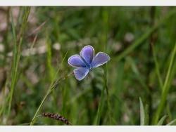Photo faune et flore, Douvres - Petit papillon