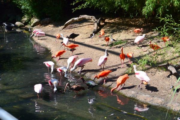 Villars les Dombes.01 .Le parc aux oiseaux.N.