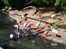 Photo paysage et monuments, Villars-les-Dombes - Villars les Dombes.01 .Le parc aux oiseaux.N.