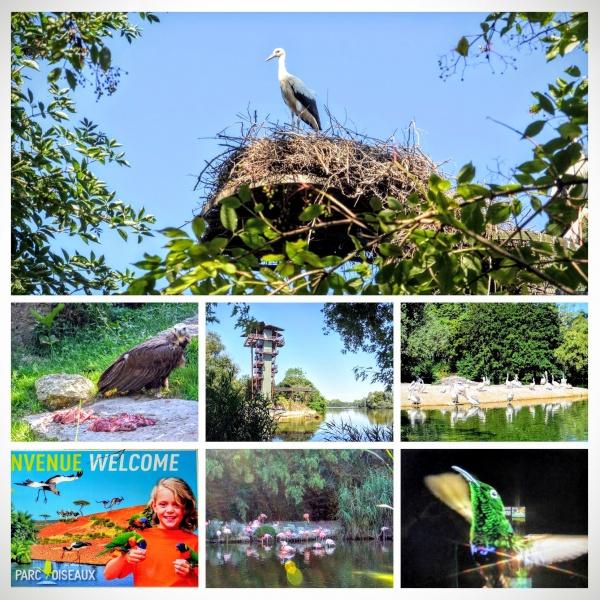Villars les Dombes.Ain -Parc des oiseaux Juillet 2016.