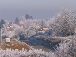 Photo faune et flore, Villeneuve - hiver 2009 (vue l'étage de l'immeuble rose rue de Muzard)