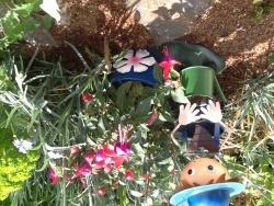 Photo faune et flore, Buire - Petit fushia ...