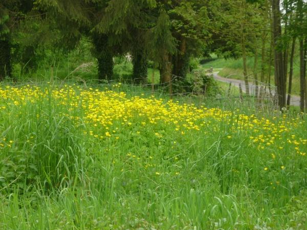 """Photo Morgny-en-Thiérache - """"La verdure du printemps, la douceur de vivre!..."""""""