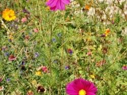 Photo faune et flore, Brugheas - Le Village