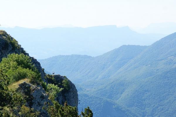 Chamois à la Grande Aiguille sur la montagne de Mélan