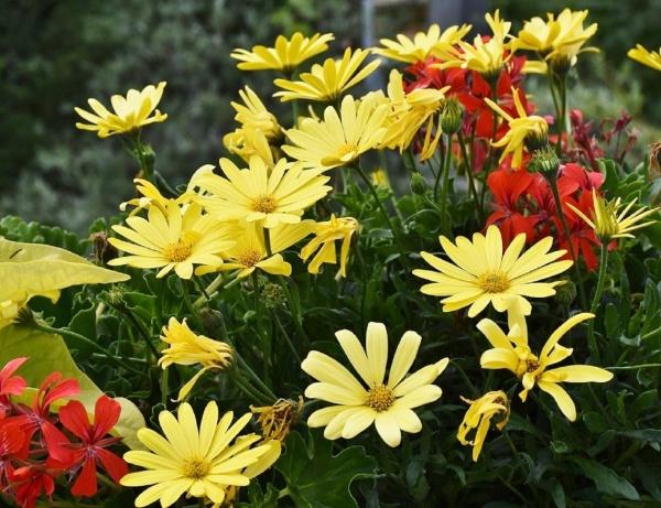 Photo Aspremont - fleurs