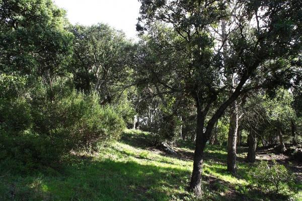 Photo Mandelieu-la-Napoule - San peire