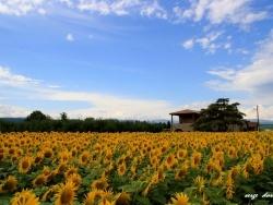 Photo paysage et monuments, Aubenas - Quartier Saint-Pierre à AUBENAS, beauté agricole