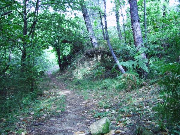 Photo Saint-Paul-le-Jeune - La Forêt