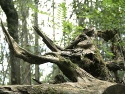 Photo faune et flore, Sainte-Croix-Volvestre - souche dans les bois de st croix