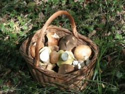 Photo faune et flore, Sainte-Croix-Volvestre - champignons