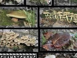 Photo faune et flore, Sainte-Croix-Volvestre - cherchez!!