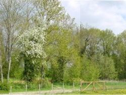 Photo faune et flore, Crésantignes - Le Béché