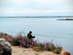 Photo paysage et monuments, Leucate - Port Leucate - Coté étangs