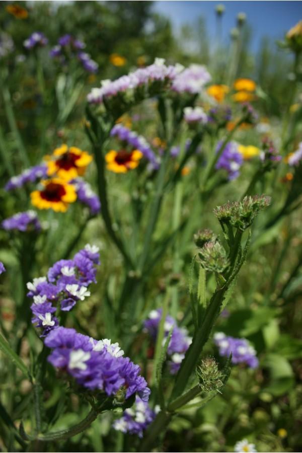 Photo Limoux - Jardin les plantes, Limoux - wonderful flowers