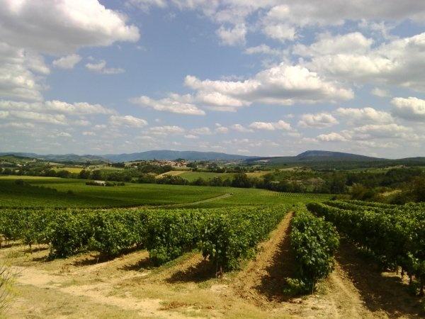 Les vignes autour de Malras