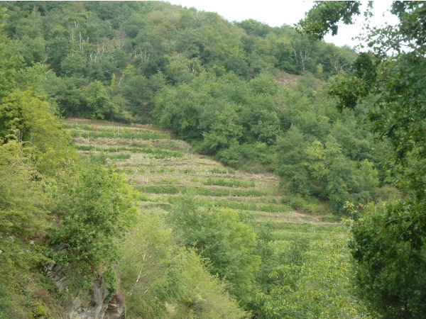 Photo Conques - Conques a des vignes