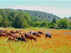 Photo de Aix-en-Provence