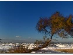 Photo paysage et monuments, Berre-l'Étang - Sous le souffle du Mistral...