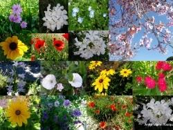 Photo faune et flore, Châteauneuf-les-Martigues - Printemps