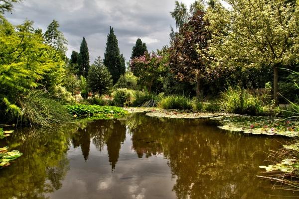 Jardin aquatique aux fleurs de l 39 eau une photo de graveson for Jardin aux fleurs