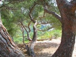 Photo paysage et monuments, Marseille - Elles sont et chantent de partout !
