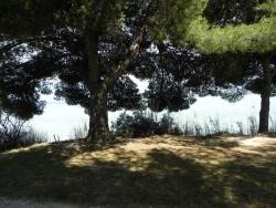 Photo faune et flore, Martigues - Pins du Parc de la Rode