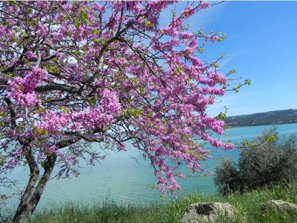 Photo Martigues - Le printemps