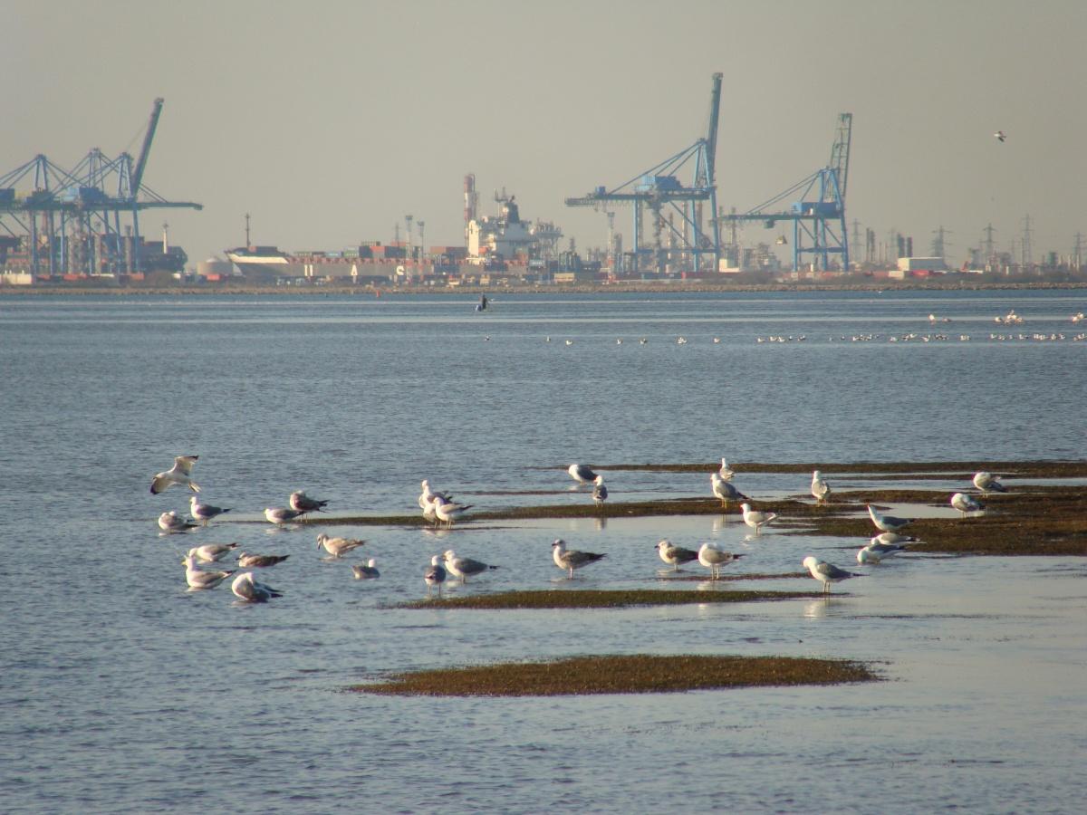 Les photos de port saint louis du rh ne 13230 - Plage napoleon port saint louis du rhone ...