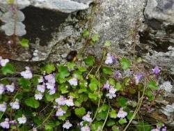 Photo paysage et monuments, Foulognes - fleurs