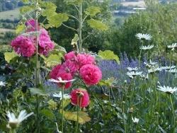 Photo faune et flore, Sainte-Marguerite-de-Viette - le jardin