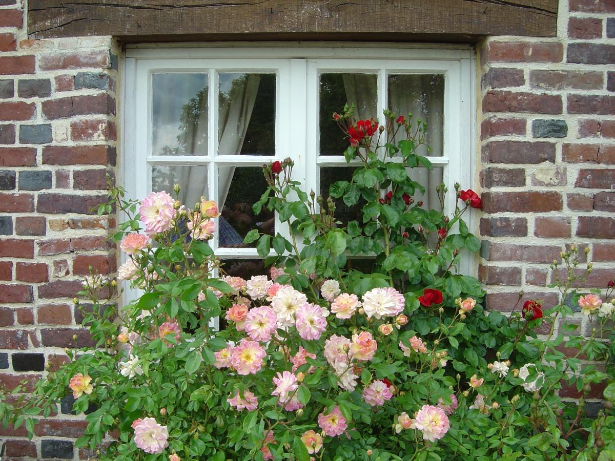 roses des petits matins bleus ste marguerite de viette une photo de sainte marguerite de. Black Bedroom Furniture Sets. Home Design Ideas
