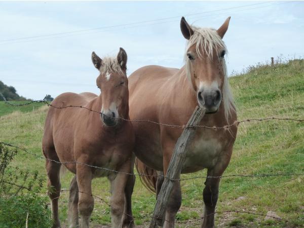 Photo Riom-ès-Montagnes - chevaux au dessus de Riom
