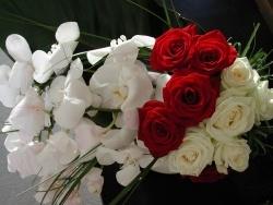 Photo faune et flore, Vieillevie - Des fleurs...encore des fleurs !!!!!