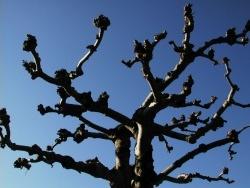 Photo faune et flore, Vieillevie - Charpente d'arbre !