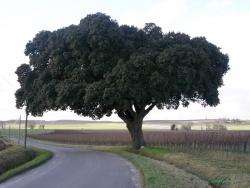 Photo faune et flore, Baignes-Sainte-Radegonde - Baignes