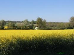 Photo faune et flore, Chevanceaux - En passant par la voie verte.