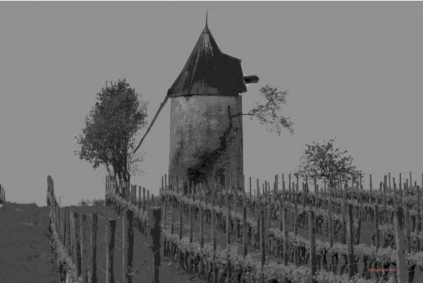 Vignes et moulin.