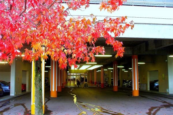 Photo Dijon - Dinon-21-Toison 'or-automne.3.