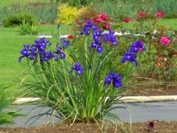 Photo faune et flore, Bourbriac - jardin Briacin