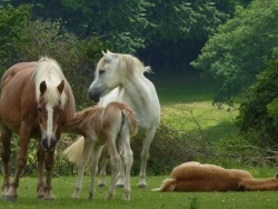 Photo faune et flore, Bourbriac - En famille