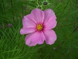 Photo faune et flore, Moustéru - Mousteru - On quitte à regret la belle saison !...