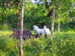 Photo faune et flore, Pleumeur-Bodou - Chevaux en semi-liberté, site naturel de Bringwiller à Pleumeur-Bodou
