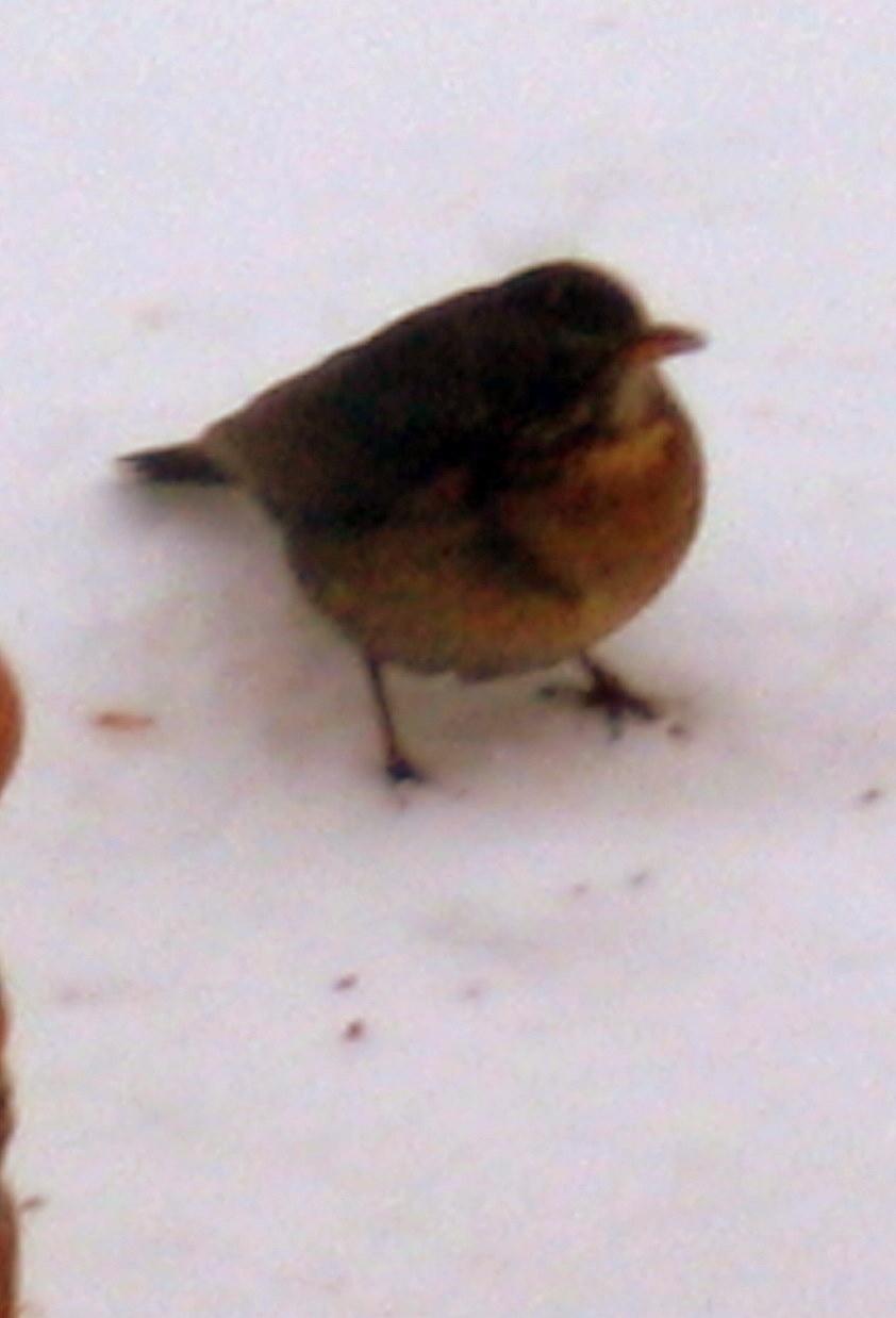 Les petits oiseaux du ciel une photo de le b lieu for Oiseaux du ciel