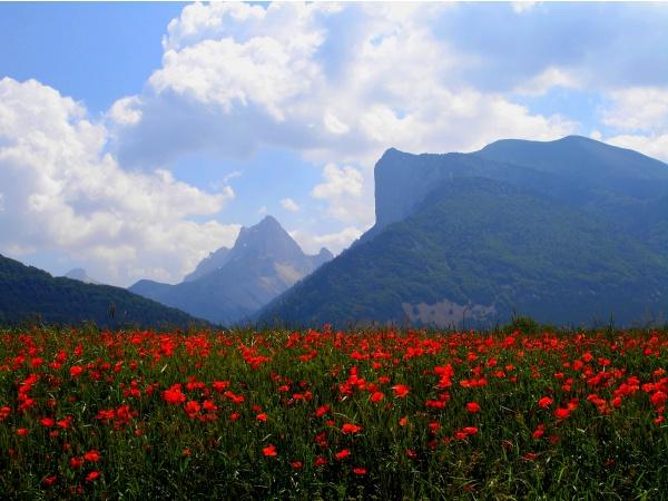 Photo Lus-la-Croix-Haute - Dites-le avec des fleurs