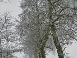 Photo paysage et monuments, Angerville-la-Campagne - Rue du bois de la Lune décembre 2010